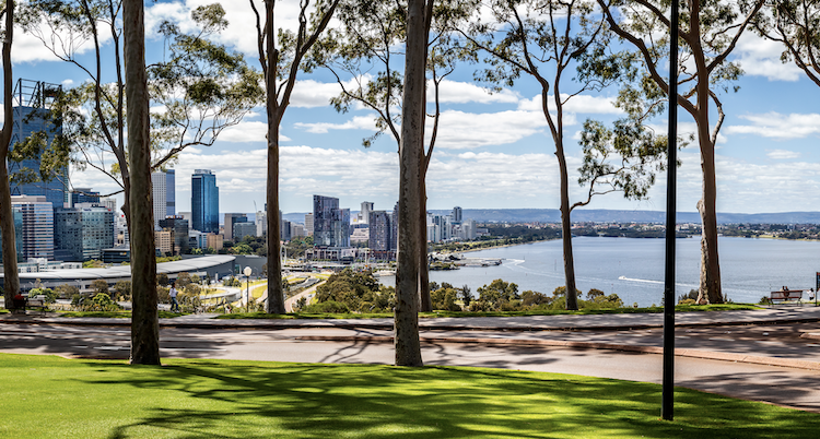 Gum trees with Perth city in the background taken at Kings Park, Western Australia